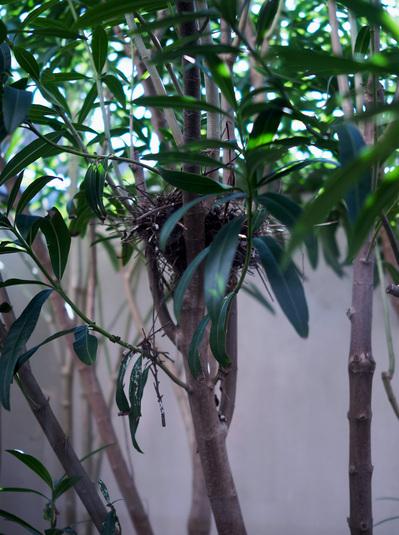 ハトの巣.jpg