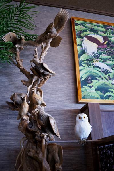 鳥フクロウ.jpg
