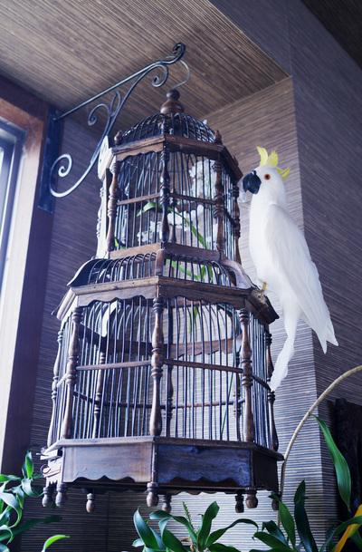 鳥白.jpg