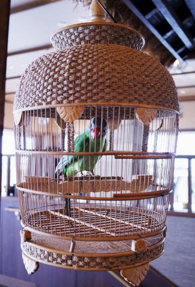 鳥緑.jpg